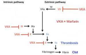 coagulation pathways blocked by Warfarin VKA