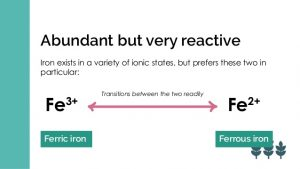 transport and reversible conversions of ferrous and ferric iron